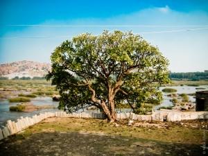 tree of life © Nabil Ghandi
