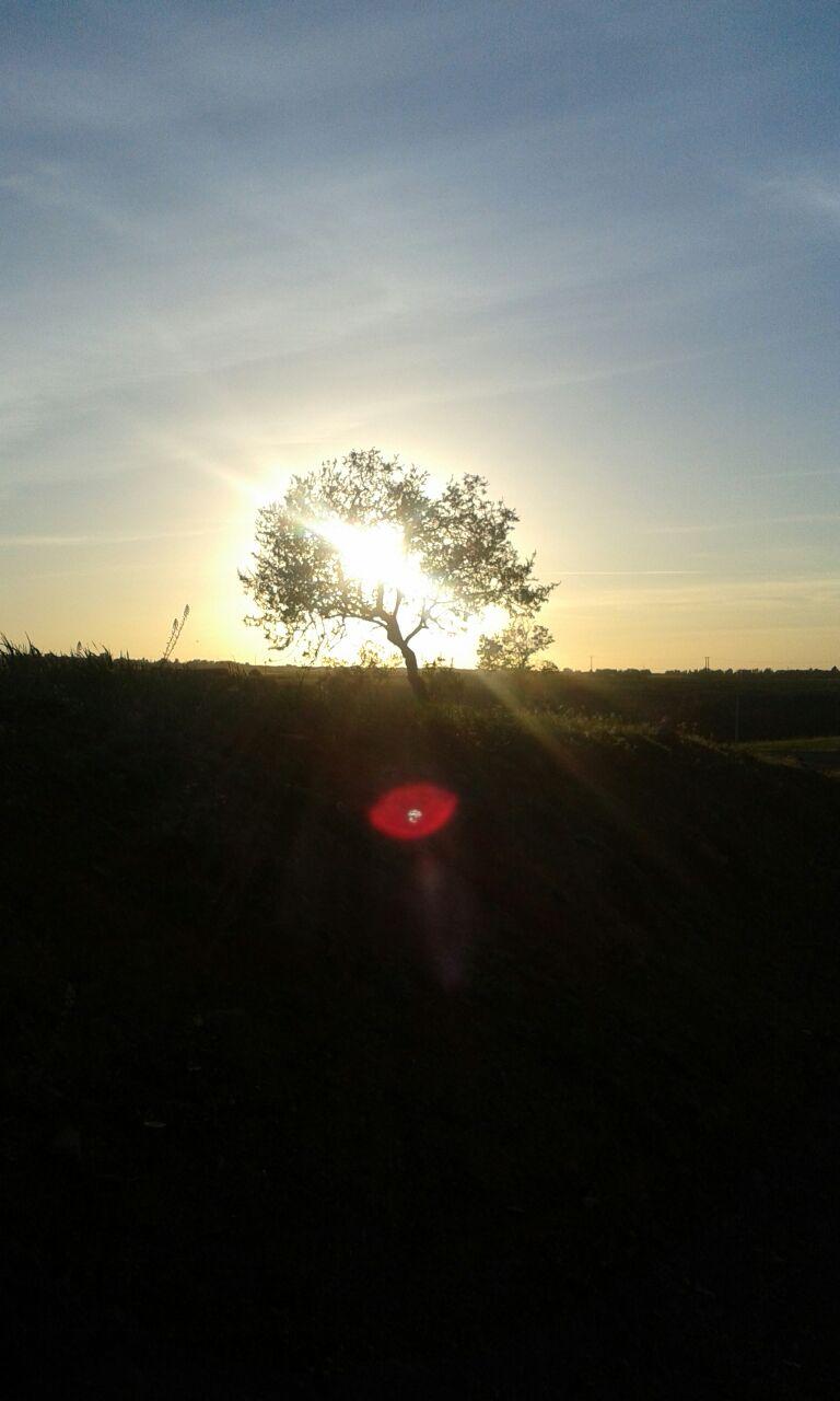 La lumière de Tahannaoute par l'écrivain Mohamed Nedali